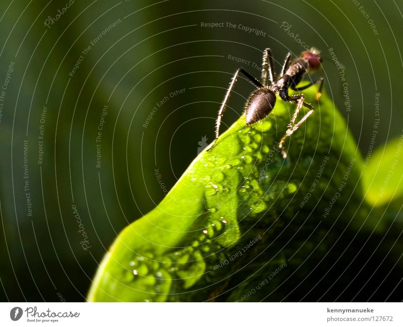 Ant Story Makroaufnahme Nahaufnahme Indonesia ant morning dew insect adventure Unschärfe