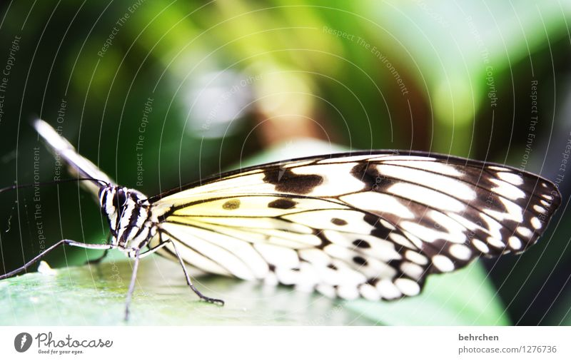 stoffmuster Natur Tier Frühling Sommer Garten Park Wiese Wildtier Schmetterling Tiergesicht Flügel Weiße Baumnymphe beobachten fliegen sitzen außergewöhnlich