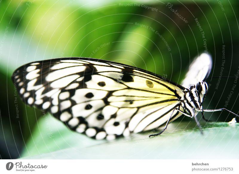 wunder der natur Natur Tier Baum Blatt Garten Park Wiese Wildtier Schmetterling Tiergesicht Flügel Weiße Baumnymphe 1 beobachten Erholung fliegen Fressen sitzen
