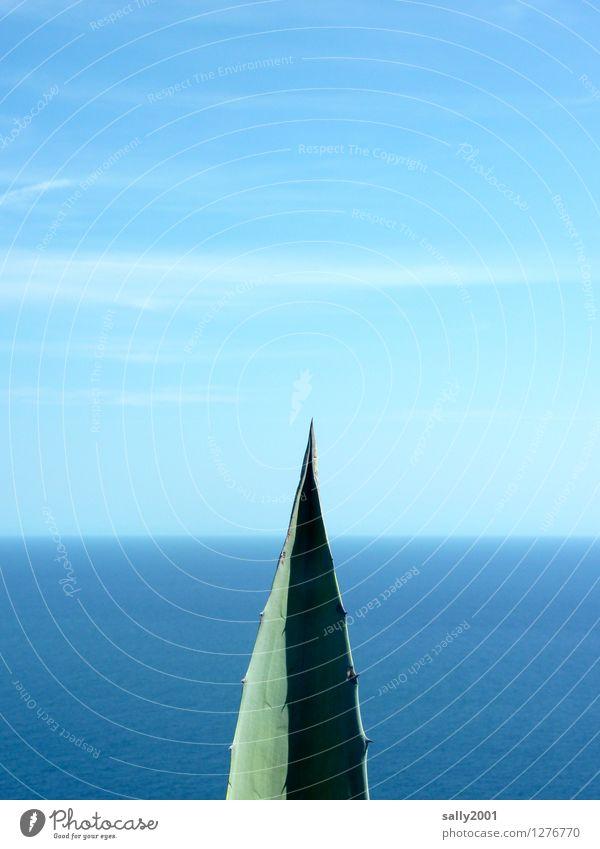 Landspitze... Himmel Natur blau Pflanze grün Meer Einsamkeit Blatt ruhig Ferne Umwelt Horizont stehen ästhetisch Aussicht fantastisch