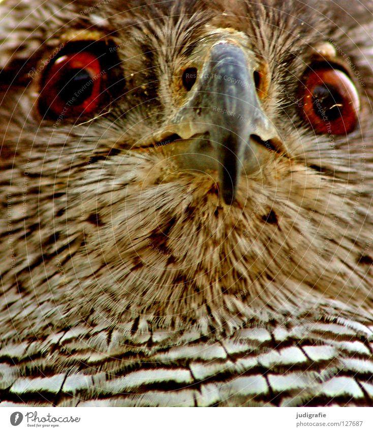 Blick Vogel Bussard Mäusebussard Schnabel Feder Muster Streifen Tier Greifvogel Umwelt gelb weiß schwarz braun Farbe Strukturen & Formen Wildtier Natur Auge