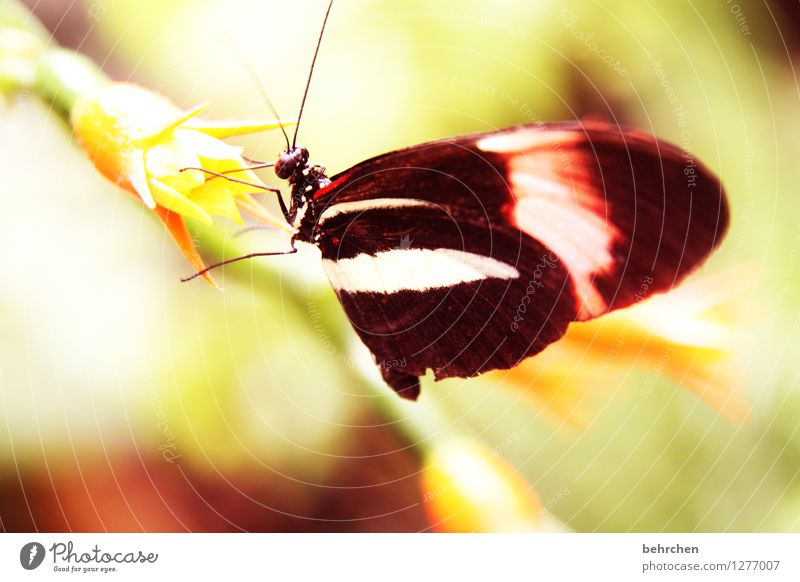 ohne is nich Natur Pflanze Sommer schön Blume Erholung Blatt Tier Blüte Frühling Wiese Beine Garten außergewöhnlich fliegen Park
