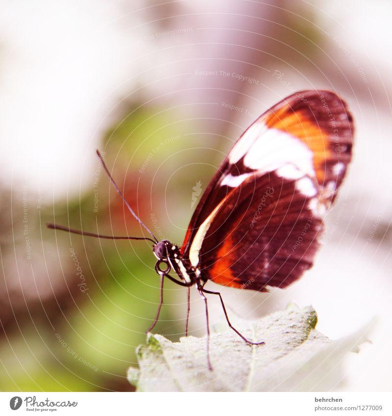 butterfly Natur Pflanze Tier Baum Sträucher Blatt Garten Park Wiese Wildtier Schmetterling Tiergesicht Flügel 1 beobachten Erholung fliegen Fressen