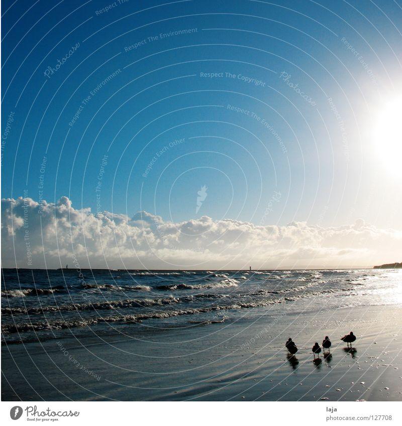 Familienidyll Ente Kontrast Tier Strand Spaziergang Sonne Wolken Altokumulus floccus Himmel Wellen Meer Morgen Sonnenaufgang Insel Idylle Gegenlicht Vogel