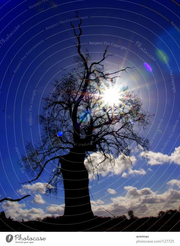 Licht und Schatten blau Baum Sonne direkt Himmelskörper & Weltall