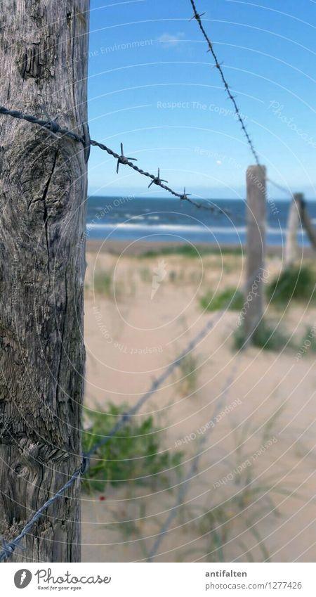 Naturschutz Ferien & Urlaub & Reisen Ferne Freiheit Sommerurlaub Sonne Strand Meer Düne Stranddüne Dünengras Umwelt Landschaft Sand Luft Wasser Himmel