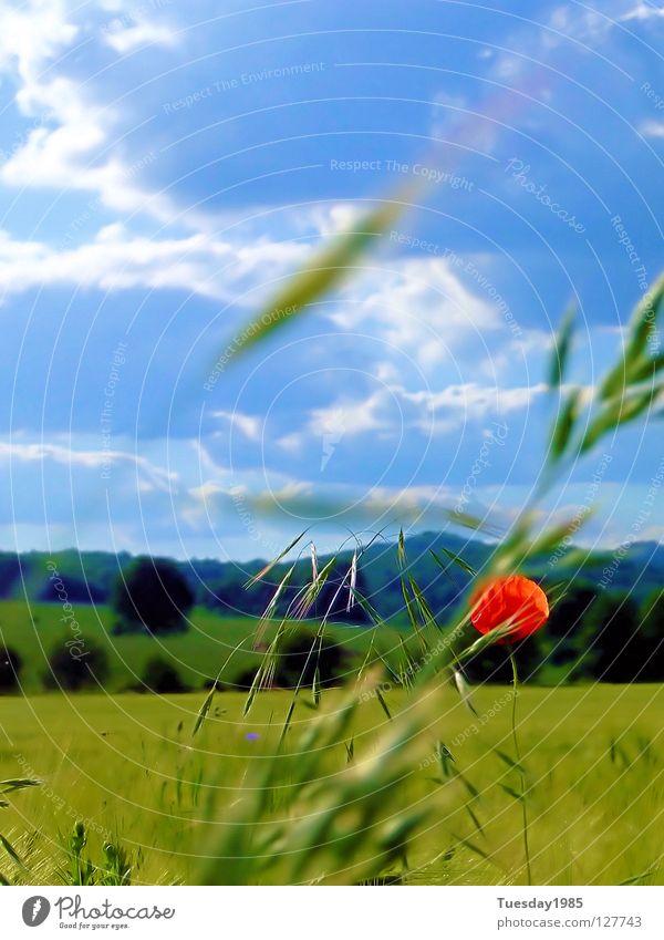 Mohnblumenblau Himmel Natur rot Blume Feld Momentaufnahme