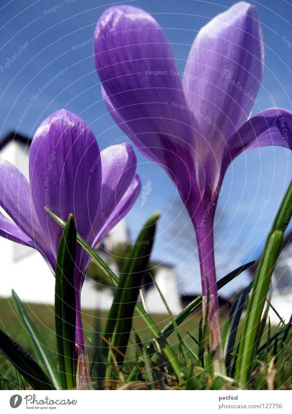 Aufbruch schön Himmel Blume grün blau Ferien & Urlaub & Reisen Leben oben Gras Frühling Beginn Perspektive neu Rasen violett unten