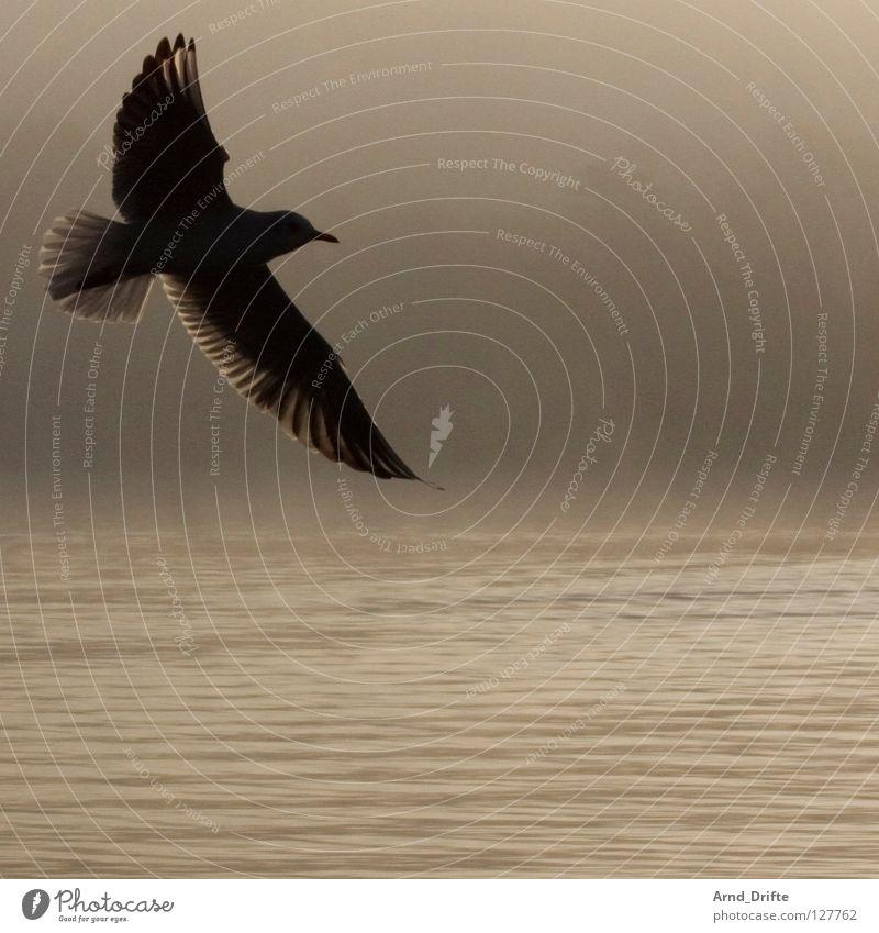 Möwe Himmel Wasser Baum Einsamkeit Wolken kalt Herbst See Vogel Beleuchtung Wellen fliegen Nebel frei frisch Flügel