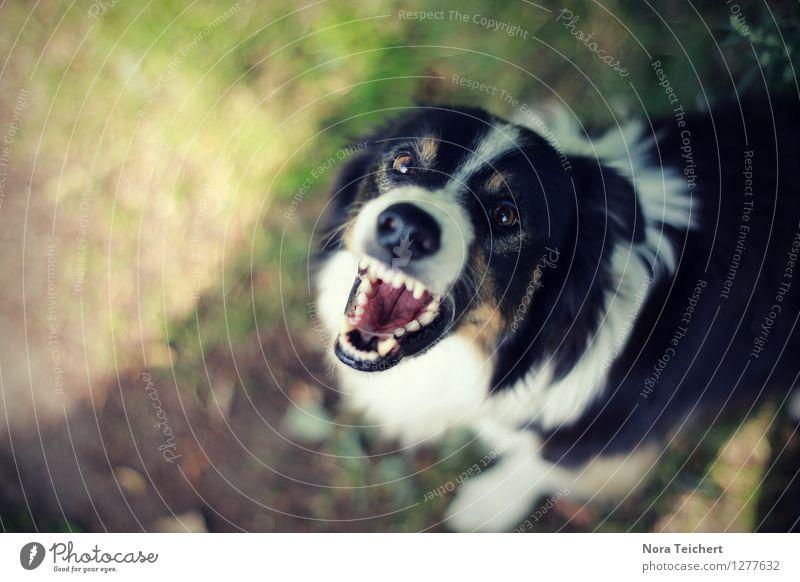 sehr fotogen. Umwelt Natur Tier Sonne Sommer Schönes Wetter Gras Garten Park Wiese Haustier Hund Aggression bedrohlich rebellisch Wut Angst gefährlich Stress