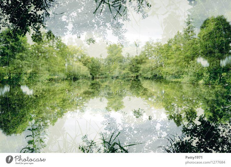 The Lake Landschaft Wasser Frühling Sommer Baum Wald Seeufer Teich natürlich grün weiß ästhetisch Zufriedenheit geheimnisvoll Natur ruhig Symmetrie Umwelt