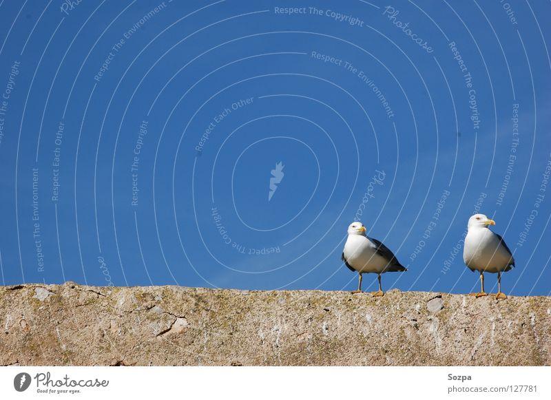 Fred & Rudi I Himmel blau Wolken Freiheit Mauer Luft Vogel Frieden Publikum Möwe