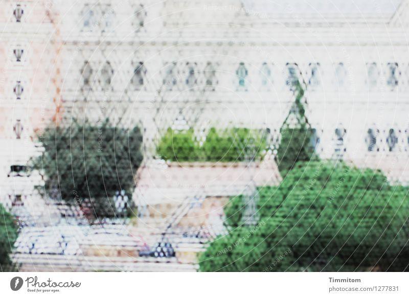 Irgendwo in Italien (16). Grünpflanze Rom Palast Gitternetz einfach grau grün schwarz Gefühle Besichtigung Innenhof Kunst Kultur Durchblick Farbfoto