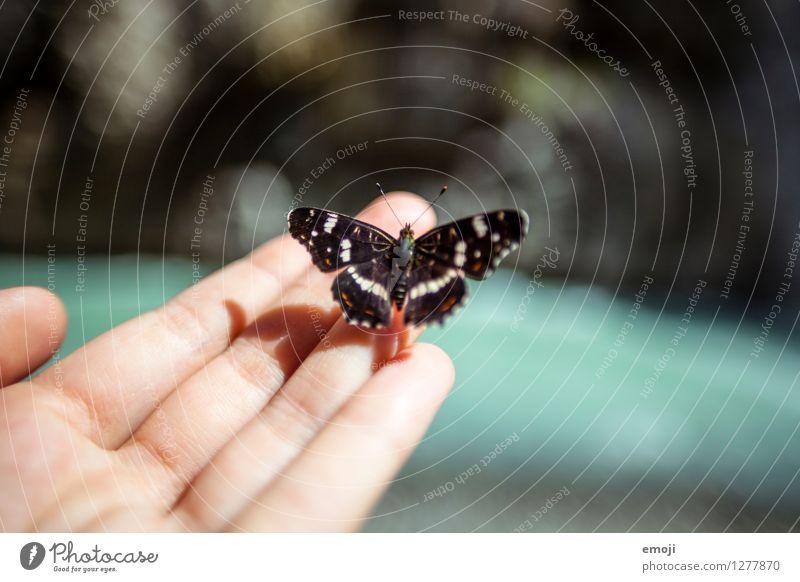 kitzlig Hand Finger Tier Wildtier Schmetterling 1 außergewöhnlich einzigartig Tierliebe Farbfoto Außenaufnahme Nahaufnahme Makroaufnahme Tag