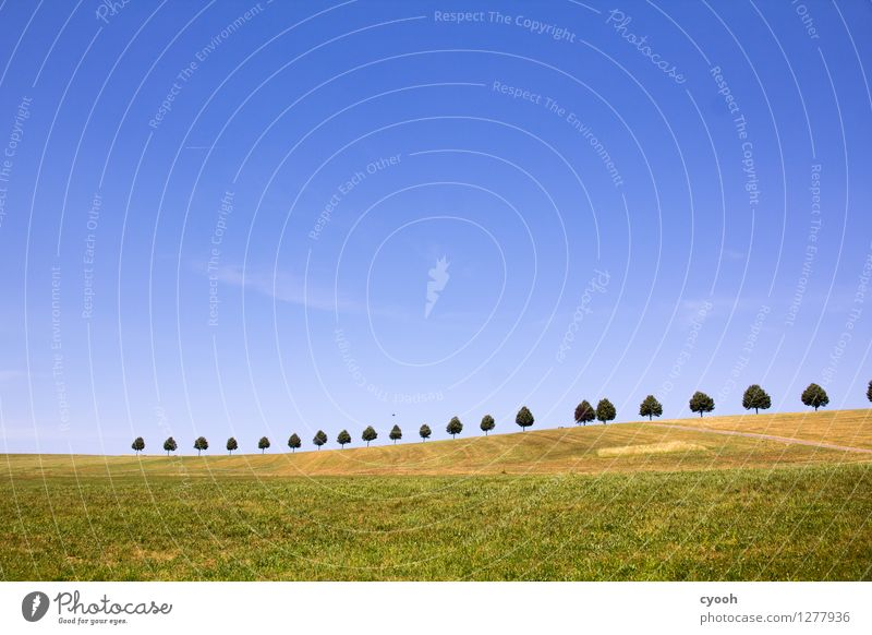 blue blue sky Natur Landschaft Himmel Wolkenloser Himmel Horizont Sommer Klima Schönes Wetter Feld heiß hell blau grün Erholung Farbe Freiheit Idylle Pause