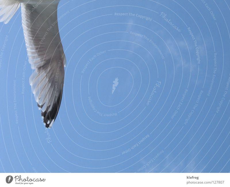 Seageil Himmel Meer blau Sommer Strand Ferien & Urlaub & Reisen Freiheit Vogel Küste Wind fliegen frei Feder Flügel Möwe Lachmöwe