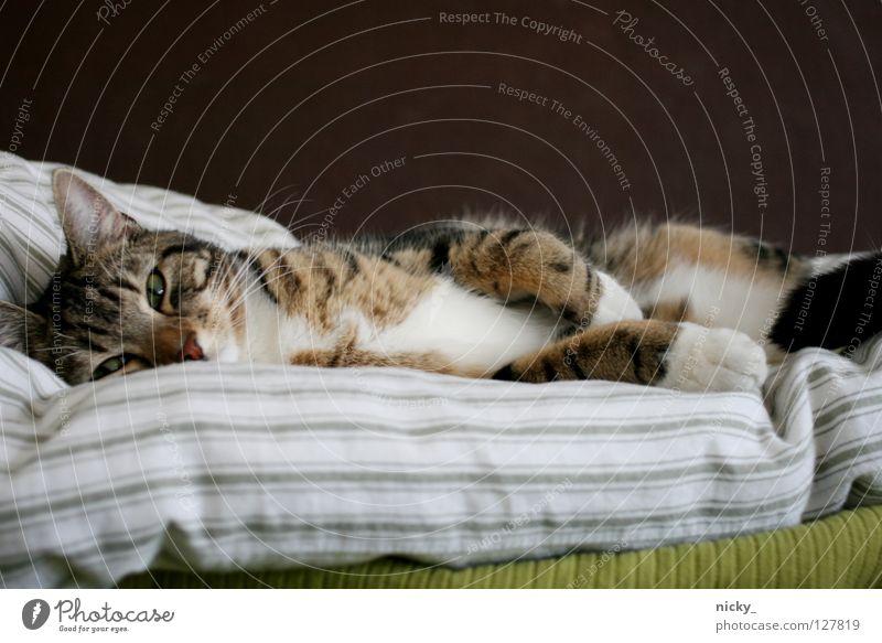 Lilalu grün Katze braun Bett weich Streifen Fell Müdigkeit Säugetier Schnurrhaar Strukturen & Formen Wollknäuel