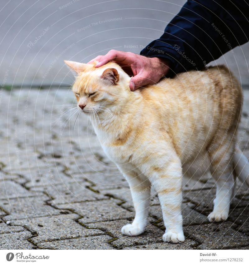 Streicheleinheiten Mensch maskulin Hand Tier Haustier Katze Fell Pfote genießen Blick träumen Freundlichkeit Zusammensein Glück schön weich gold Gefühle