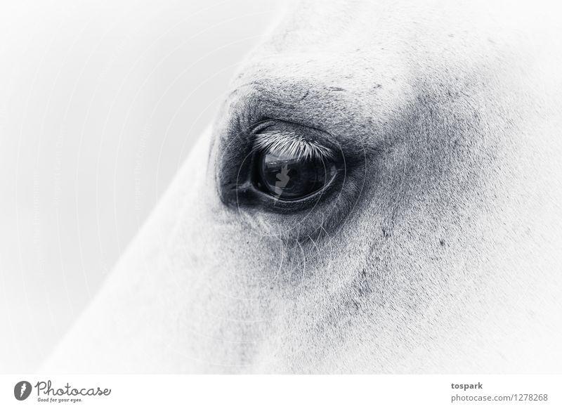 Augen Erholung ruhig Meditation Reiten Reitsport Haustier Nutztier Pferd 1 Tier Ferien & Urlaub & Reisen schaukeln elegant exotisch feminin wild weiß Gefühle