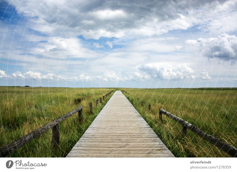 Sylt Ferien & Urlaub & Reisen Tourismus Ausflug Abenteuer Ferne Freiheit Expedition Umwelt Natur Landschaft Himmel Wolken Horizont Schönes Wetter Gras Sträucher
