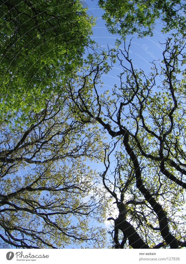 Geäst Himmel Baum grün Ast durcheinander