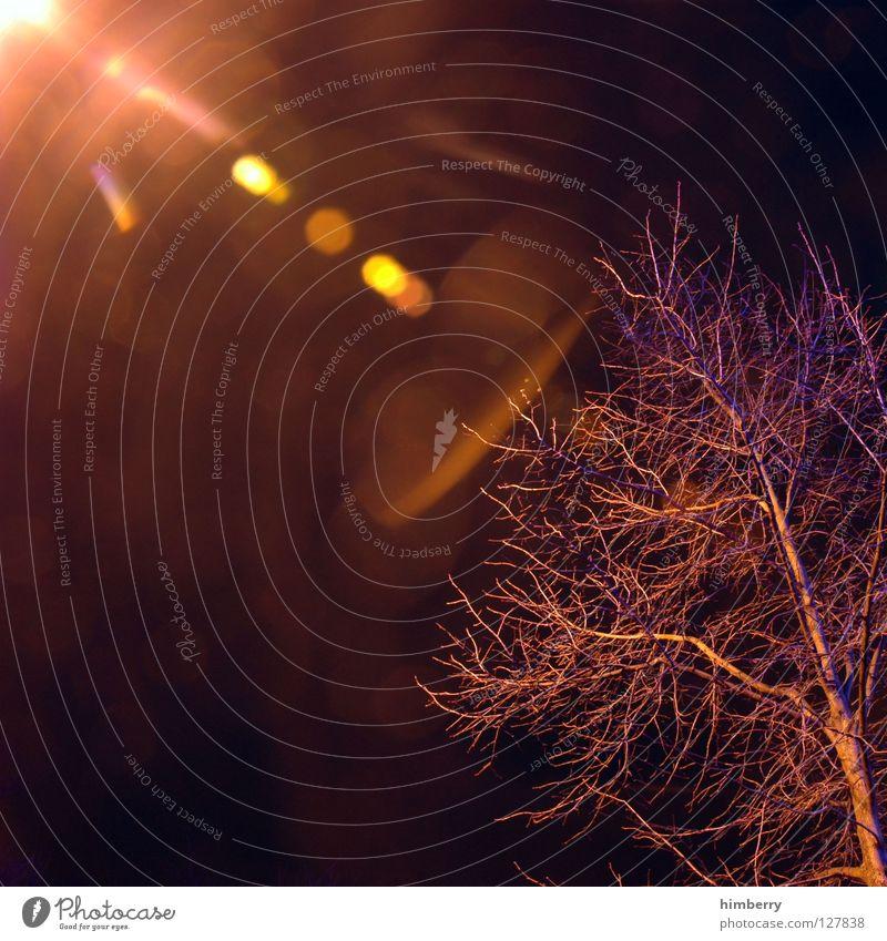 tree@citylife.de Ampel Licht Langzeitbelichtung Belichtung Verkehr Nacht Straßenverkehr stoppen stehen Überqueren Straßenbeleuchtung Laterne Lampe Baum