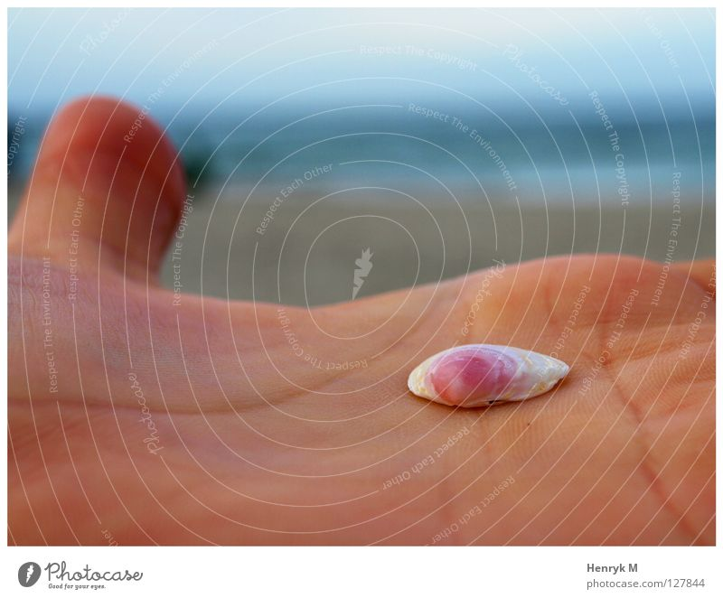 Kleine Muschel in Hand Meer Sommer Freude Freiheit frisch Sehnsucht Körperteile