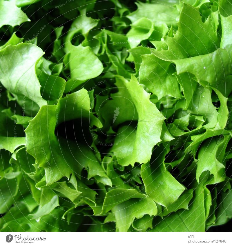 Salat Lebensmittel Gemüse Salatbeilage Ernährung Bioprodukte Vegetarische Ernährung Gesundheit Sommer Erdöl frisch lecker grün Appetit & Hunger Salatblatt
