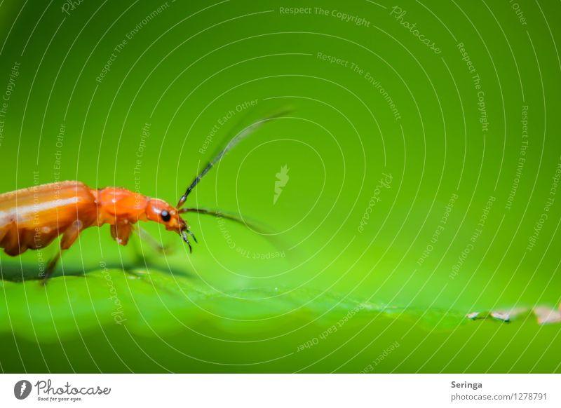 Ich Suche , nur was ? Umwelt Natur Landschaft Pflanze Tier Garten Park Wiese Feld Wald Käfer Tiergesicht Flügel 1 fliegen krabbeln Insekt Farbfoto mehrfarbig