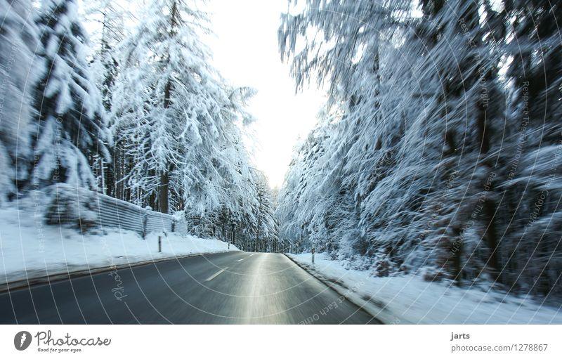 ab ins kühle Winter Wetter Eis Frost Schnee Schneefall Baum Wald Straße fahren frisch nass Geschwindigkeit Natur Eile Farbfoto Außenaufnahme Menschenleer