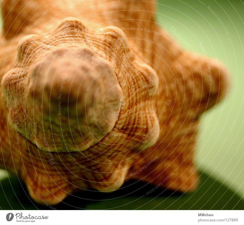 Hörst Du das Rauschen? Muschel Meer See Schneckenhaus fossil Spirale gedreht schön unnatürlich Kalk Schutzhülle Bauchnabel Garnspulen Naht Tier zurückziehen