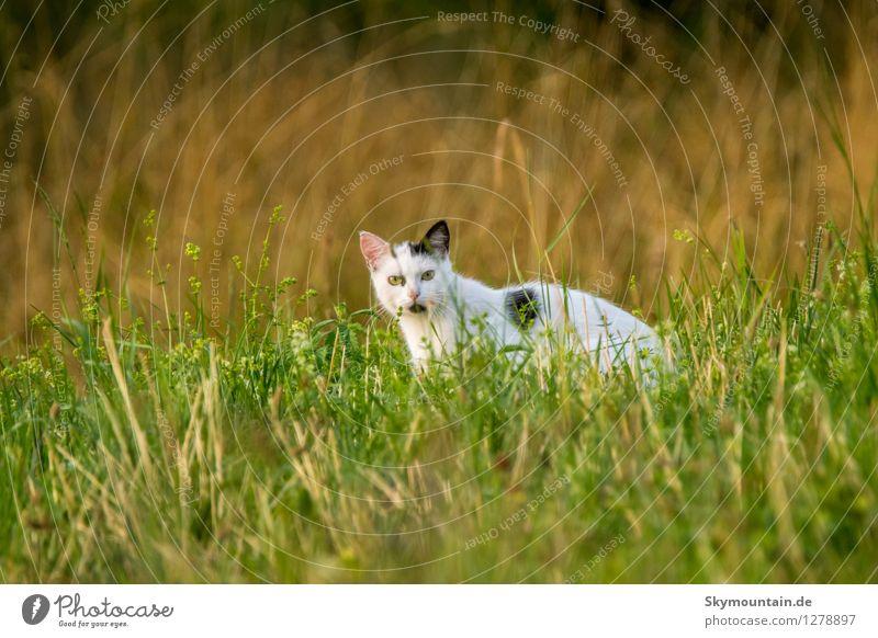 Katze im Gras Natur Pflanze grün Sommer weiß Freude Tier schwarz Umwelt gelb Leben Wiese Garten rosa