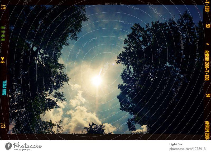 Sun is shining! Umwelt Natur Landschaft Pflanze Klima Klimawandel Schönes Wetter Regen Baum dehydrieren Wachstum warten blau schwarz Sonne Wolken Sommer