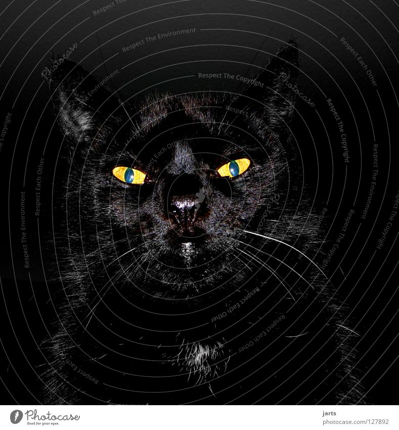 black cat Katze schwarz Tier hypnotisch Vampir Werwolf gruselig Stofftiere Säugetier Angst Panik gefährlich Blick Lampe Karter jarts Katzenauge Auge