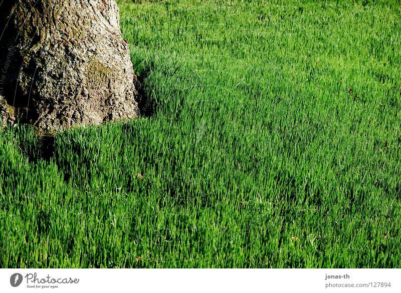 Fruchtige Wiese grün Baum Frühling Sommer Erholung Feld Bäune intensive Farben Rasen