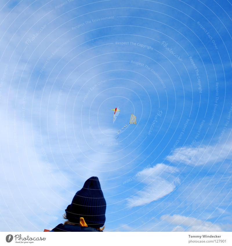Drachen sollen fliegen Himmel blau Strand Freude Wolken Herbst oben Freiheit Luft Wind Freizeit & Hobby frei Flugzeug Luftverkehr Flügel
