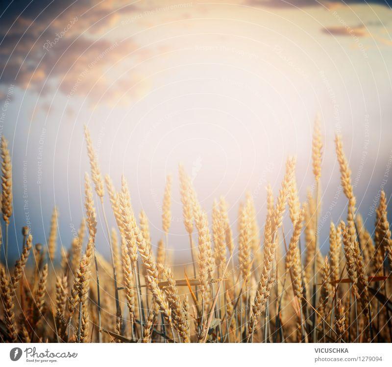 Getreide Feld Lifestyle Design Gesunde Ernährung Natur Landschaft Himmel Horizont Sonnenaufgang Sonnenuntergang Sonnenlicht Sommer Herbst Schönes Wetter Pflanze