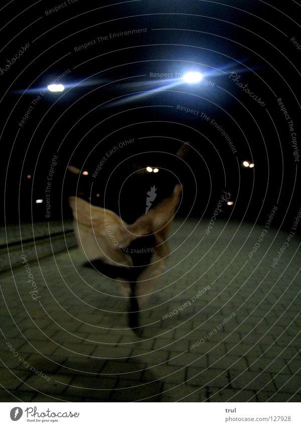 Satin Butterfly Straße springen Tanzen fliegen Kleid Gleise Abend Pflastersteine