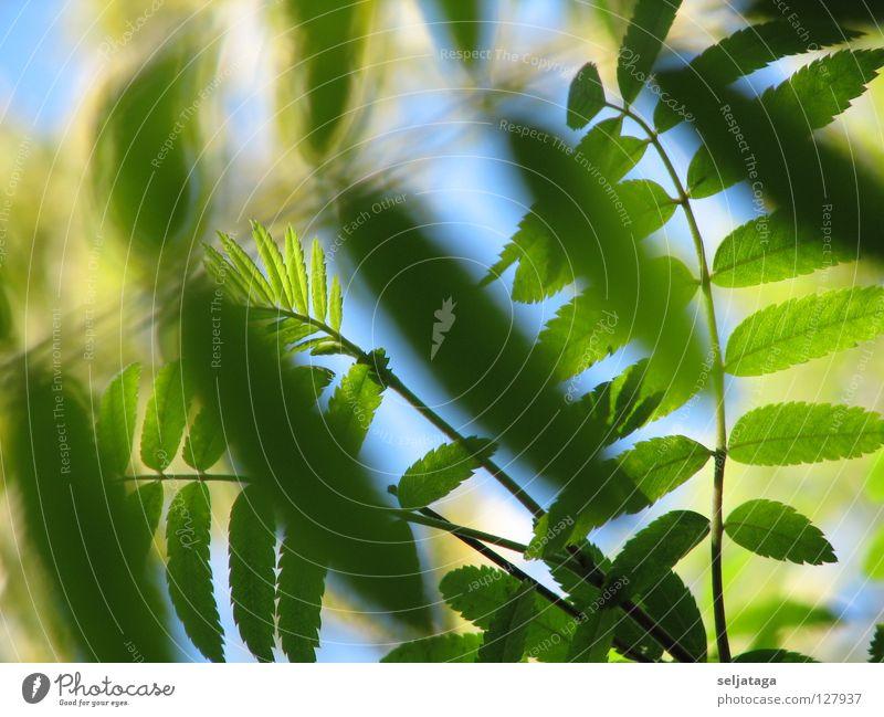 Foliage plant Natur Himmel Pflanze