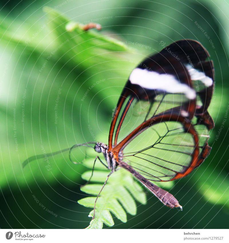 glas Natur Pflanze Tier Frühling Sommer Schönes Wetter Baum Blatt Garten Park Wiese Wildtier Schmetterling Flügel 1 beobachten Erholung fliegen Fressen sitzen