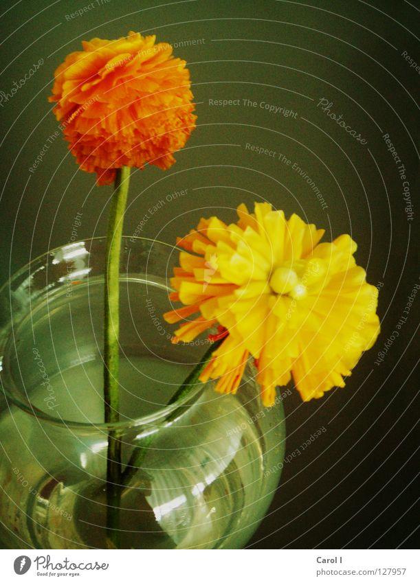 für Oma Wasser grün schön Pflanze Blume gelb dunkel Blüte orange Glas Wohnung offen Dekoration & Verzierung Stengel Blumenstrauß Überraschung