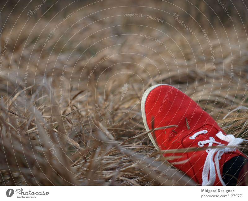 Rot im Gras Sommer Fuß Natur Feld Schuhe Turnschuh rot Farbe Stroh Farbfoto mehrfarbig Außenaufnahme Nahaufnahme Tag Abend Dämmerung Unschärfe