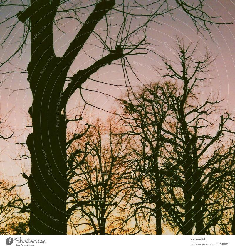 Winterabend Dämmerung Baum violett kalt Karlsruhe Schlosspark Abend Himmel Abenddämmerung Traurigkeit