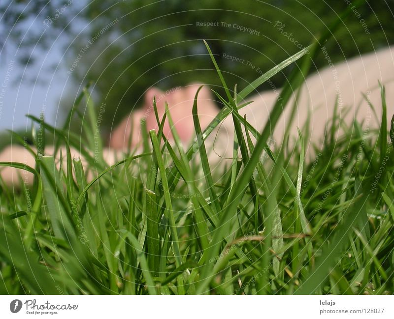 Afternoon nap in the park Natur Sommer Erholung springen Garten Park Niederlande