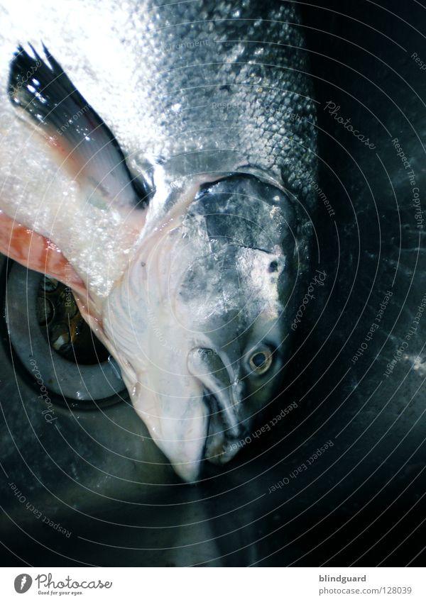 Karfreitag(sessen) Wasser Auge Tod Religion & Glaube glänzend frisch groß Ernährung nass Kochen & Garen & Backen Symbole & Metaphern Fisch Küche Gastronomie fangen Bar
