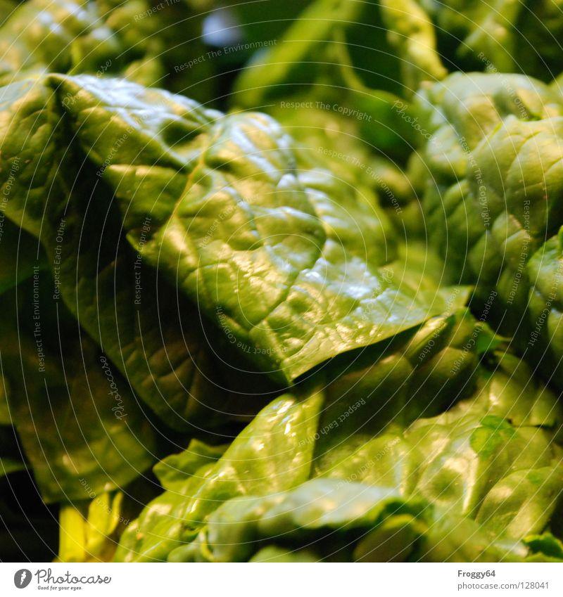 Popeye´s food Natur grün Blatt Ernährung Gesundheit Gemüse Vegetarische Ernährung Spinat Gesunde Ernährung Vegane Ernährung Spinatblatt