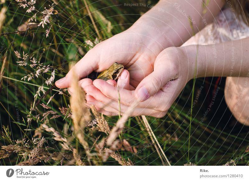 Vielleicht ein Prinz. Hand Umwelt Natur Pflanze Tier Sommer Gras Wiese Frosch Tiergesicht 1 beobachten berühren entdecken natürlich Vertrauen Sympathie