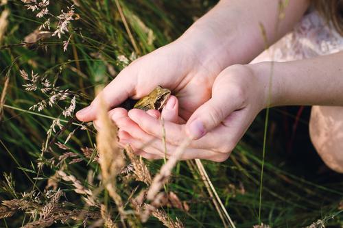Vielleicht ein Prinz. Natur Pflanze Sommer Hand Tier Umwelt Wiese Gras natürlich Freundschaft beobachten Abenteuer Romantik berühren Hilfsbereitschaft Neugier