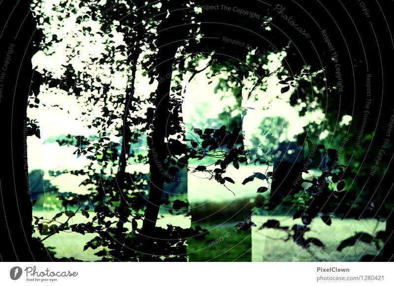 Wald Natur Ferien & Urlaub & Reisen grün Baum Landschaft Blatt ruhig Tier Kunst Stimmung Feld Wachstum wandern Sträucher ästhetisch