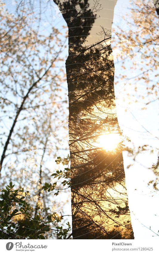 Baum für Romantiker Natur Ferien & Urlaub & Reisen schön Landschaft Wald gelb Leben Stil außergewöhnlich Lifestyle Kunst Stimmung träumen Design Tourismus